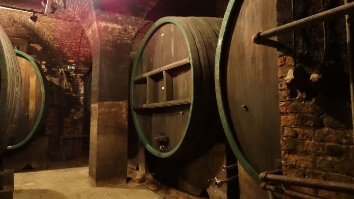 vinska klet ptuj
