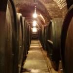Vinska klet Ptuj (fotogalerija)