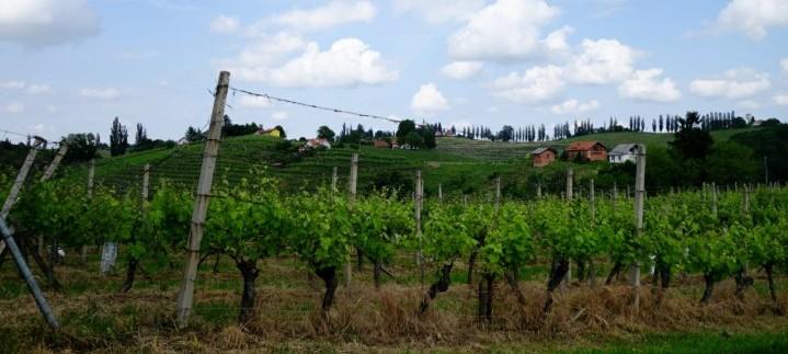 Jeruzalemska vinska cesta