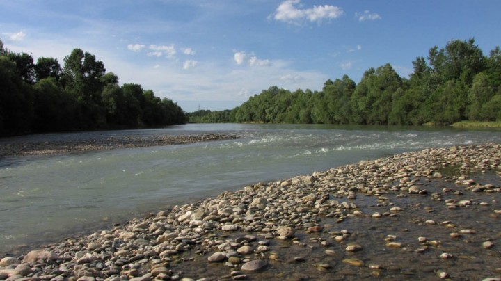 bogastvo narave ob reki dravi
