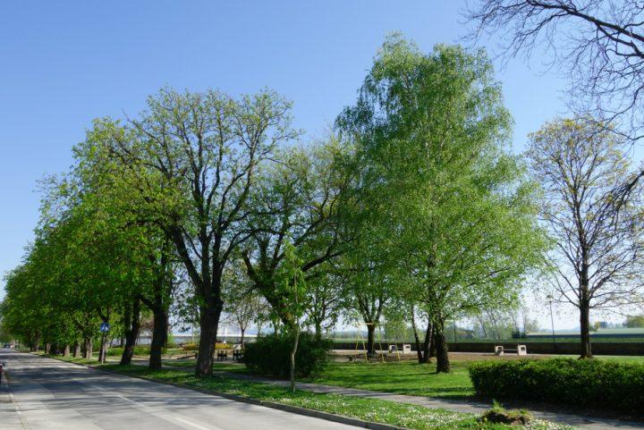 mestni park ptuj