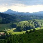 Pot po Halozah: Borl – Gorenjski vrh – Borl (fotogalerija)