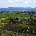 Ptujska pohodna pot: Med vinogradi in sadovnjaki