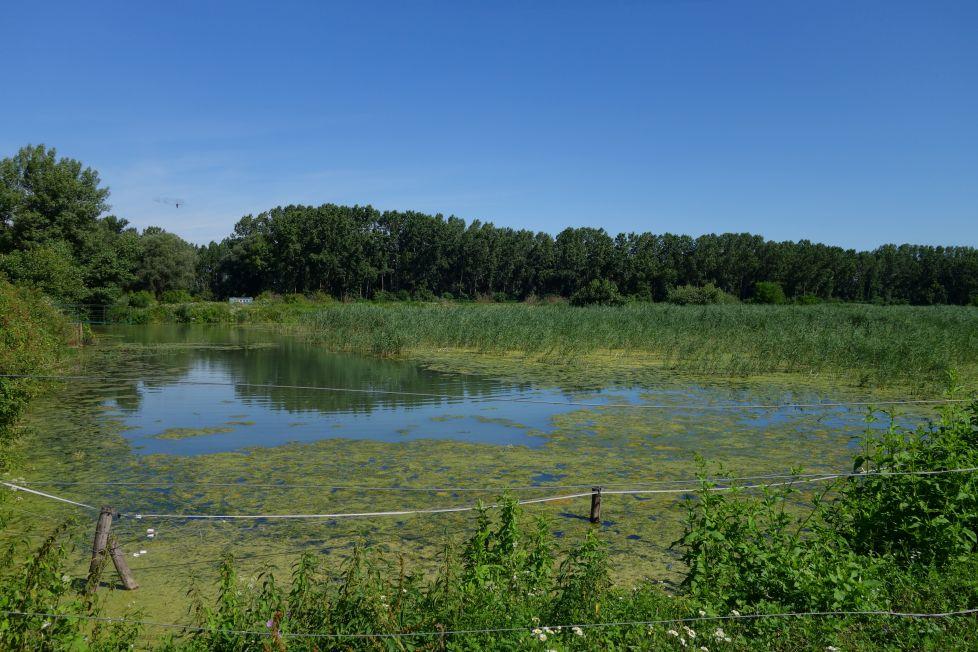 ormoške lagune