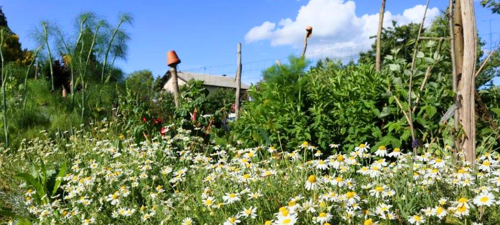 Brankin vrt, Brunšvik